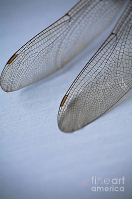 Macro Dragonfly Photograph - Dragonfly Wings by Jan Bickerton