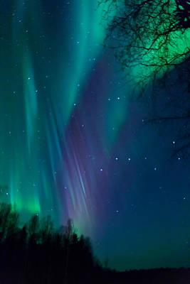 Alaska Photograph - Drapes Of Light by Dora Miller
