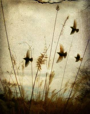 Dream Field Print by Gothicolors Donna