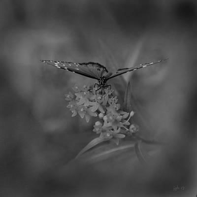 Observer Photograph - Dream Maker by Joseph G Holland