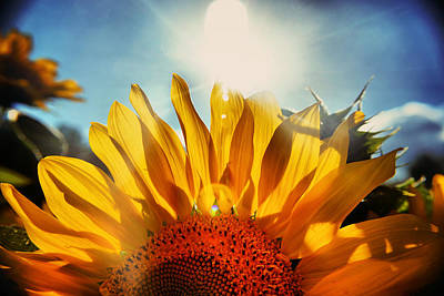 Sunflower Photograph - Dream Of Sunflowers by Emily Stauring