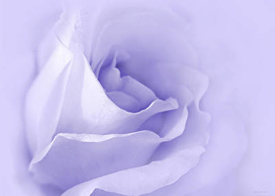 Rose Portrait Photograph - Dreaming Of Lavender Roses by Jennie Marie Schell