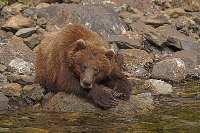 Prints Of Alaska Photograph - Dreaming Of Salmon- Abstract by Tim Grams