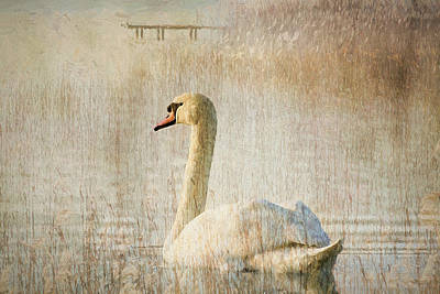 Waterscape Mixed Media - Songs Of A Swan by Georgiana Romanovna