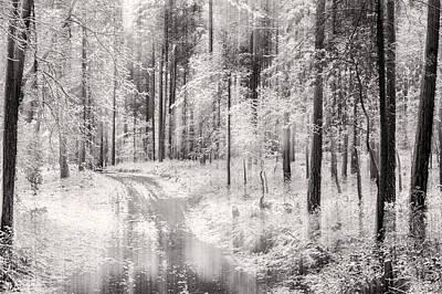 Forest Photograph - Dreamland by Marc Garrido
