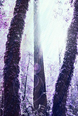 Dreamy Forest Print by Nicole Swanger