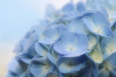Contemporary Abstract Photograph - Dreamy Hydrangea by Lisa Knechtel