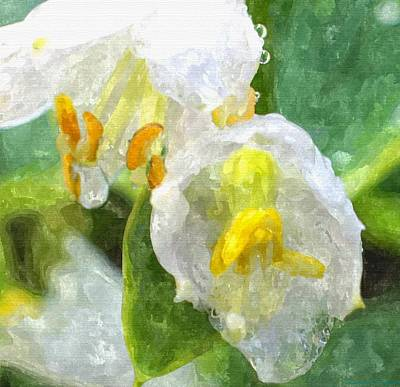 Drenched In White Iv Hosta Flowers Macro Print by Rosemarie E Seppala