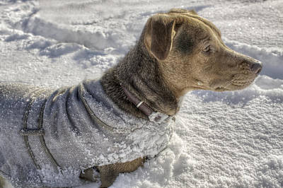 Dressed For The Snow Print by Jason Politte