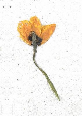 Igor Baranov Photograph - Dried Flower by Igor Baranov