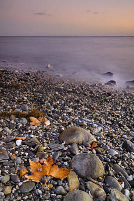 Dried Leaves Of The Sea Print by Guido Montanes Castillo