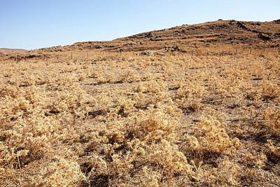 Dried Up Farmland On Lemnos Greece Print by Ashley Cooper