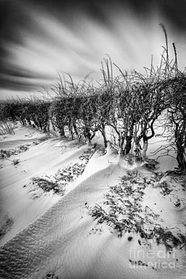 Drifting Snow Photograph - Drifting by John Farnan