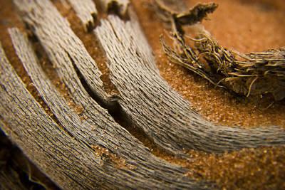 Driftwood Photograph - Driftwood 2 by Adam Romanowicz