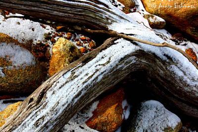 Driftwood  Print by Anne Babineau