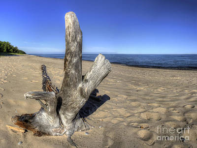 Driftwood At Pictured Rocks Print by Twenty Two North Photography
