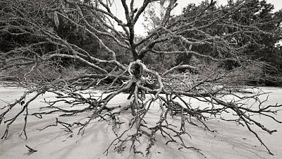 Driftwood Print by Barbara Kraus - Northrup