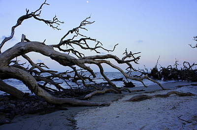 Cypress Stump Photograph - Driftwood Beach by Laurie Perry