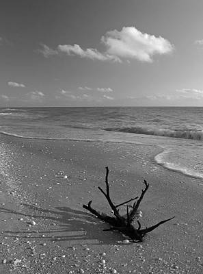 Bowmans Beach Photograph - Driftwood by Juergen Roth