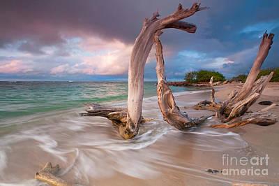Driftwood Sunset  Print by Katherine Gendreau