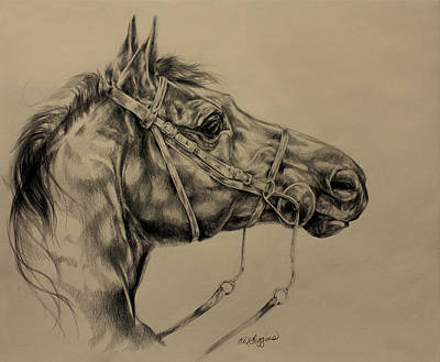 Wild Horse Drawing - Drinking Horse Mountain by Derrick Higgins
