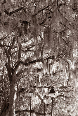 Photograph - Dripping Feathers by Jennifer Apffel