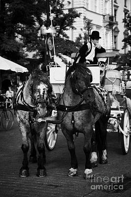 Polish City Photograph - Driver And Grey Horses Tourist Horse Drawn Carriage In Rynek Glowny Old Town Square Stare Miasto Krakow by Joe Fox