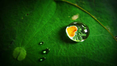 Suradej Photograph - Droplet Of Love by Suradej Chuephanich