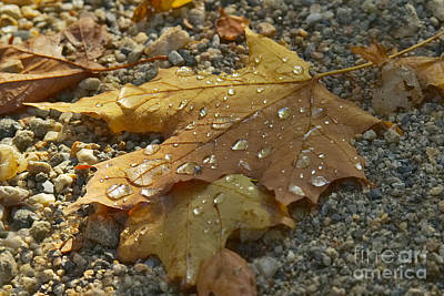 Fallen Leaves Photograph - Drops by Charles Kozierok
