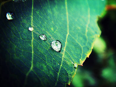 Plants Photograph - Drops Of Joy by Zinvolle Art
