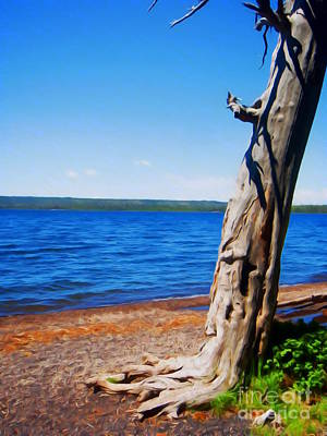 Dry Tree By Lake Print by John Kreiter