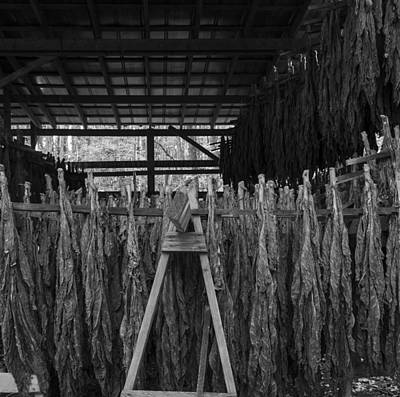 Murray Kentucky Photograph - Drying Upside Down by Amber Kresge