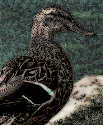 Limited Time Offers Digital Art - Duck Art Mallard Tribal Teal by Lesa Fine