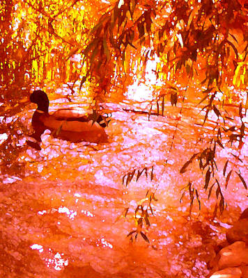 Duck Painting - Duck In Warm Light by Amy Vangsgard