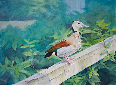 Watercolor Painting - Duck On A Fence by Christopher Reid