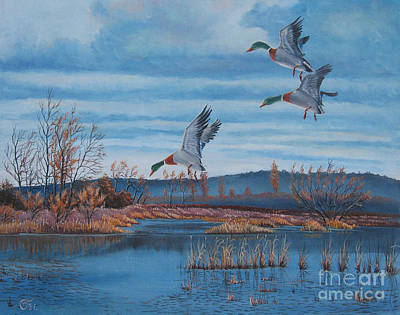 Ducks 2 Print by Osi