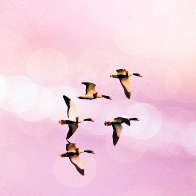 Pigeon Mixed Media - Ducks Flying High And Bokhe by Toppart Sweden