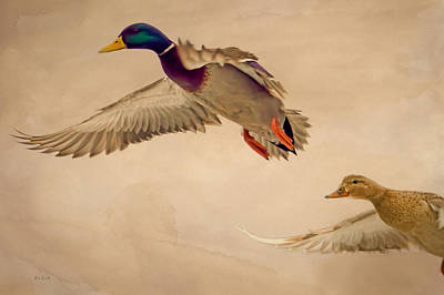 Ducks In Flight Print by Bob Orsillo