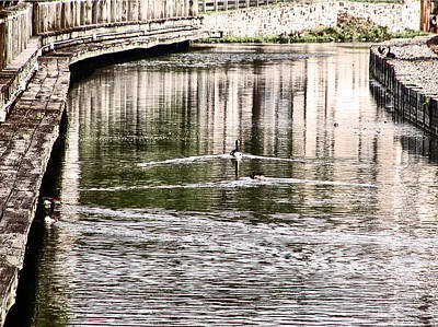 Ducks Swimming In The Manayunk Canal Print by Bill Cannon