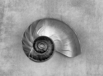 Seashell Photograph - Duet In Black And White by Chrystyne Novack