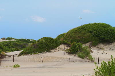 Grass Photograph - Dunes And Grasses 9 by Cathy Lindsey