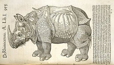 Durer's Rhinoceros, 16th Century Print by Natural History Museum, London