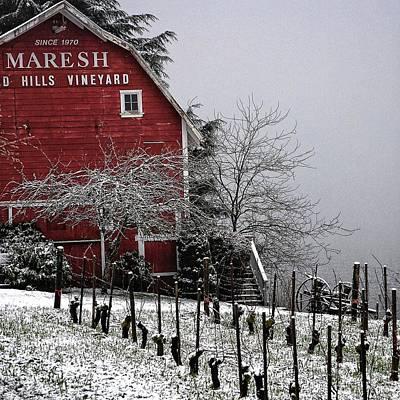 Dusting Of Snow On The Vines Original by CJ Lesieutre