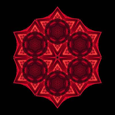 Dying Amaryllis IIi Flower Mandala Print by David J Bookbinder