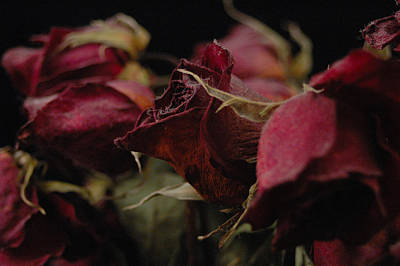 Flower Photograph - Dying Bouquet by Gary Marx
