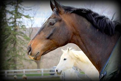 Horses Photograph - Dynamic Duo by Aurelio Zucco