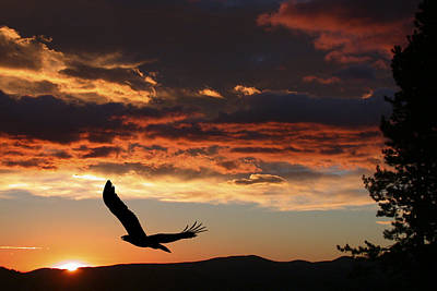 Soaring Photograph - Eagle At Sunset by Shane Bechler