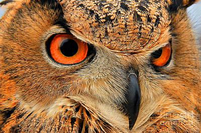 Eagle Owl Print by Leslie Kirk