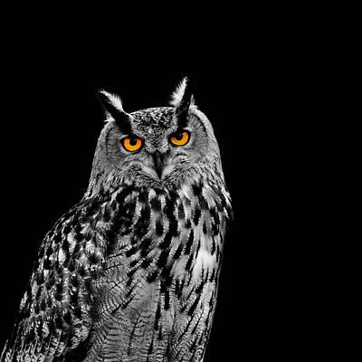 Of Birds Photograph - Eagle Owl by Mark Rogan