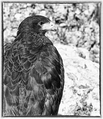 Historical Re-enactments Photograph - Eagle by Jose Elias - Sofia Pereira